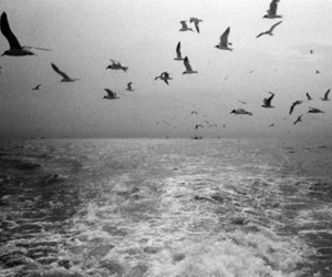 bird, black and white, and sea image