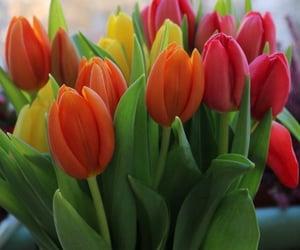 arrangement, bouquet, and flowers image