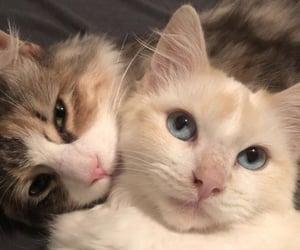 i love cats sm