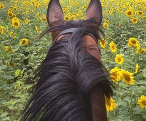 aesthetic, horseriding, and paradise image