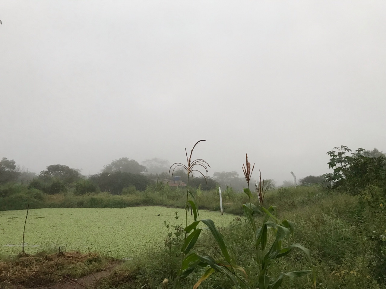 autoral, fog, and inspiration image