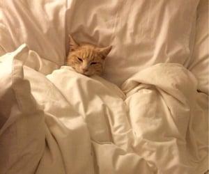 comfy cat sleeping in blanket ^..^