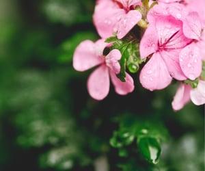 flower, rain, and alpha_newgeneration image