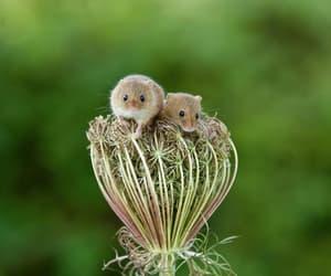 Adorable Harvest Mice