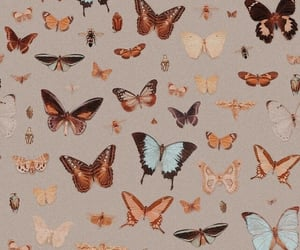 wallpaper, butterfly, and background image