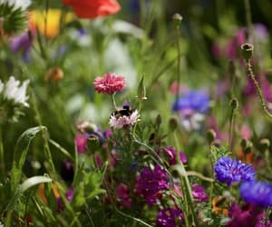 beautiful, bee, and colorful image