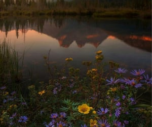flowers, aesthetic, and mountain image