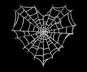 black and spider web image