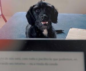 analog, dog, and vintage image