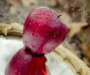 apple, disney, and fantasy image