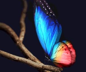 beautiful, butterflies, and butterfly image
