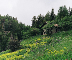 beautiful, cabin, and flowers image