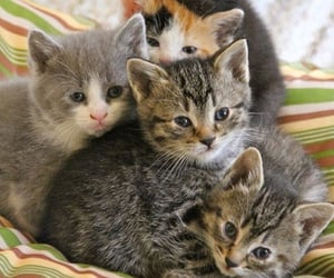 cat, kitty, and animal image