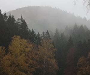 autumn, forest, and rainy image