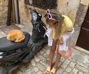 cat and europe image
