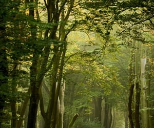 enchanted forest, silvaris, and forest image