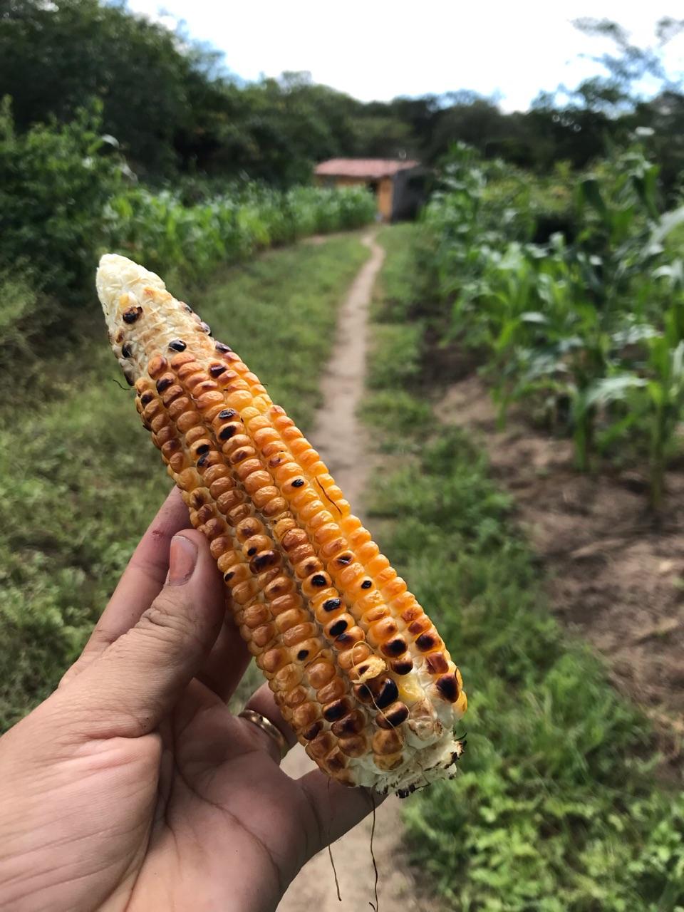 corn, inspiration, and nature image