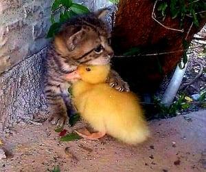 animal, cat, and hug image