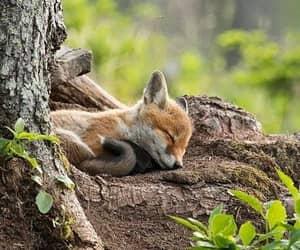 Animals do Dream ~