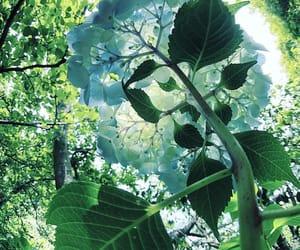 flower, hydrangea, and instagram image