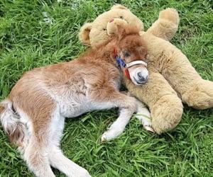 Precious Little Foal ♡