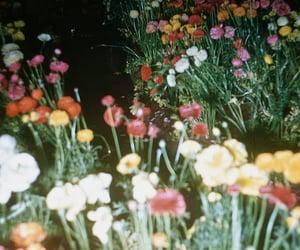 flowers, grunge, and vintage image