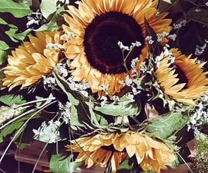 beautiful, hq, and sunflower image