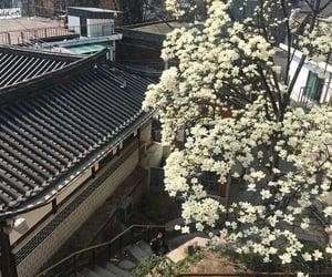 aesthetic, flowers, and korea image