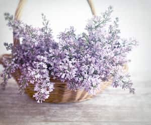 aesthetic, basket, and decor image