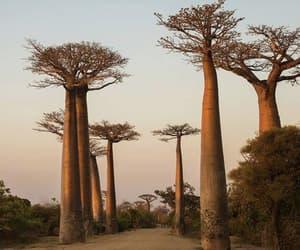madagascar, nature, and travel image