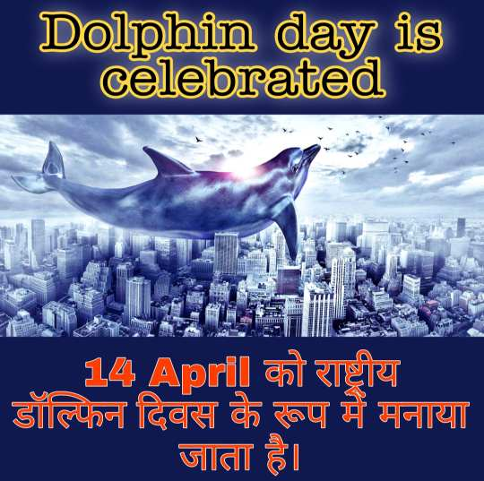 article, dolphin family, and dolphin animal image