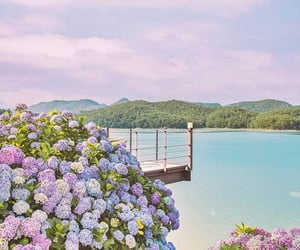 Corea, hydrangea, and korea image
