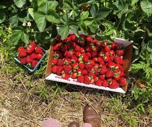 garden, nature, and strawberries image