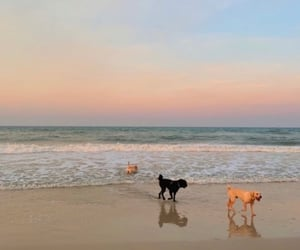 beach, dogs, and pets image