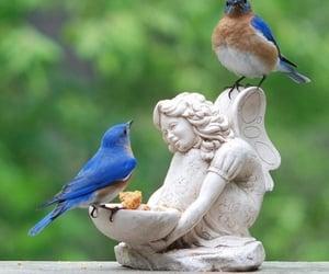 birds, garden, and spring image
