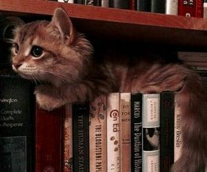 cat, books, and animals image