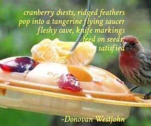 food, haiku, and seeds image