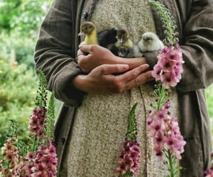 baby chicks and flowers image