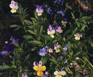 flowers, garden, and plant image