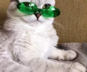 aesthetic, cat cats, and cool image