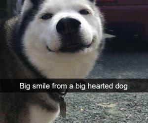 animals, dog, and happy image