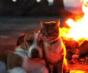 bonfire, fuego, and perro image