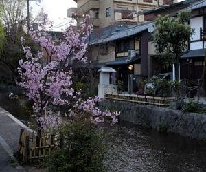 35 mm, blossom, and cherry blossom image
