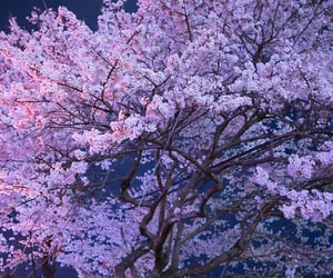35 mm, cherry blossom, and inspiration image