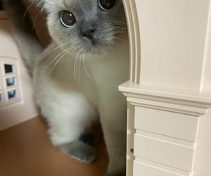 animals, cuteness, and catlover image