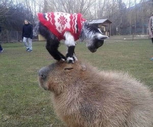 adorable, goats, and cute image
