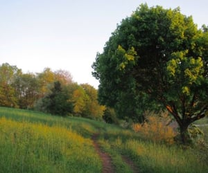 country, green, and photography image