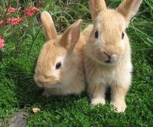 animal, bunny, and plants image
