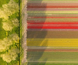 aerial photography, aerial view, and agriculture image