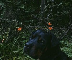 aesthetic, dog, and dark image